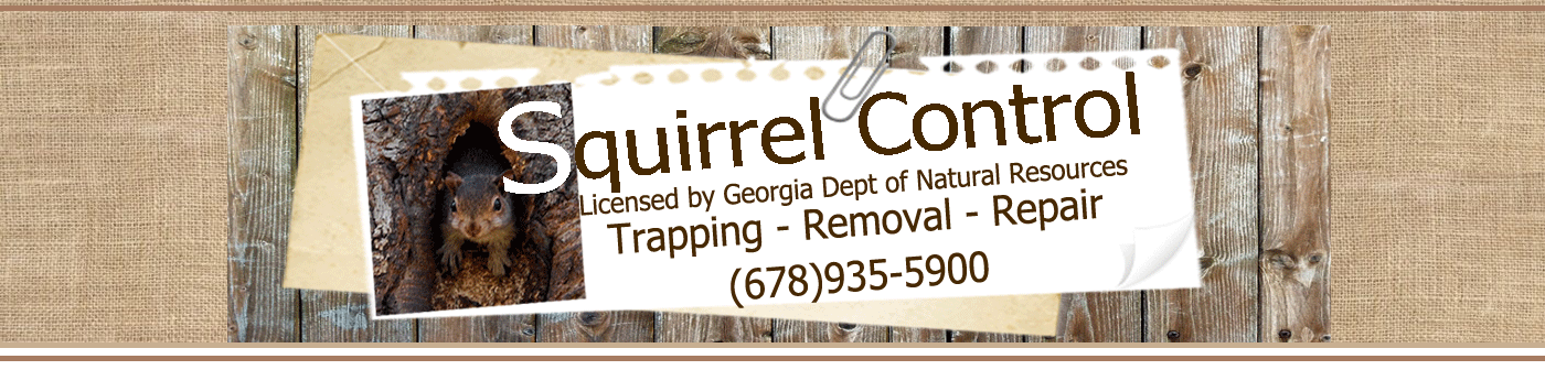 Squirrel Trapping – Squirrel Control Services