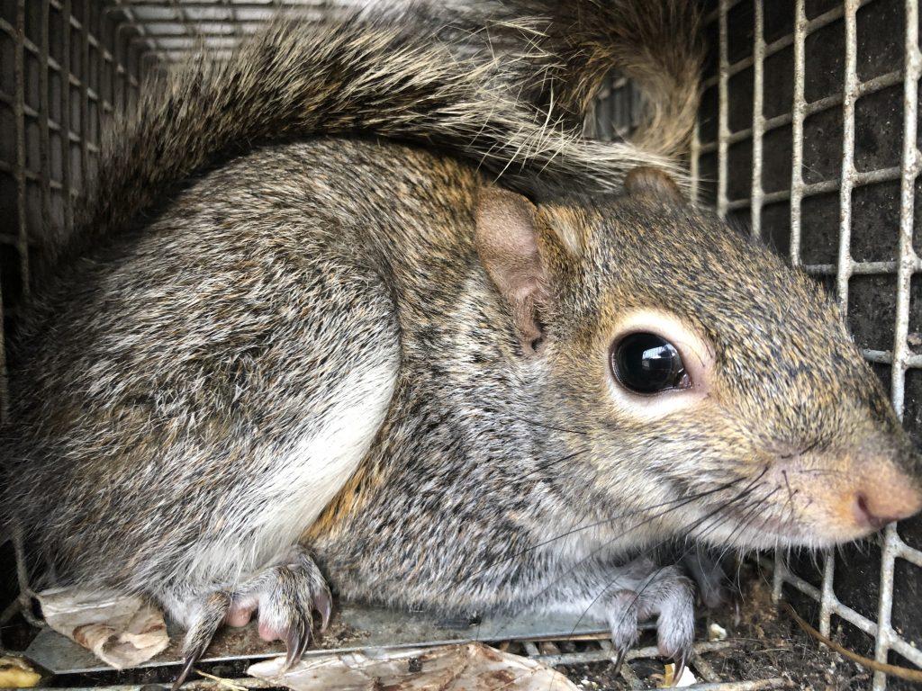 alpharetta squirrel