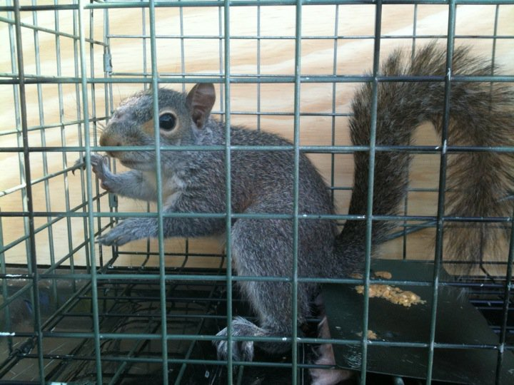 johns creek squirrel